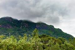 Berg- och gräsplanträd Morgondimma ovanför berget fotografering för bildbyråer