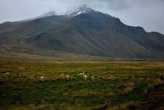 Berg och guanacos Royaltyfria Foton