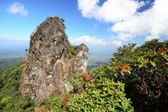 Berg och rhododendron Arkivfoto