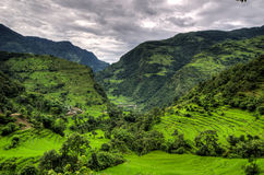 Berg och Ricekolonier i Annapurnaen arkivfoton