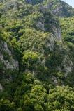 Berg och skog Arkivbild