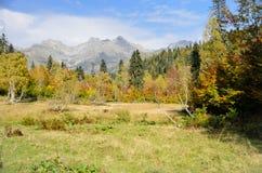 Berg och skog i Abchazien Fotografering för Bildbyråer
