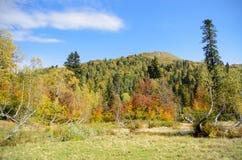 Berg och skog i Abchazien Arkivfoto