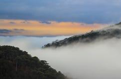 Berg och träd i dimma på solnedgången Royaltyfri Bild