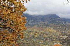 Berg och träd i Pyrenees, höst, Valle de Tena Arkivfoto