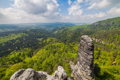 Berg och vaggar i skogen arkivbilder