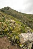 Berg på ön av Tenerife Arkivfoton