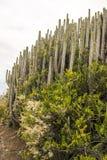 Berg på ön av Tenerife Fotografering för Bildbyråer