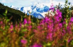 Berg på Alaska arkivfoto