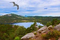 Berg på vägen till Cliff Preikestolen i fjorden Lysefjor Arkivbilder