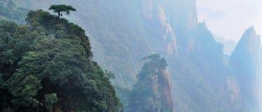 berg pijnbomen stock fotografie