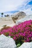 Berg Pride Blossom Royalty-vrije Stock Afbeeldingen
