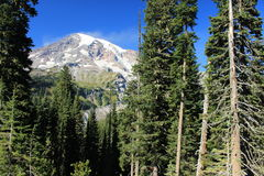 Berg Rainier National Park Washington State Vereinigte Staaten Lizenzfreie Stockfotos