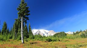 Berg Rainier National Park Washington State Vereinigte Staaten Stockfotos