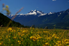 Berg Revelstoke Stockbild
