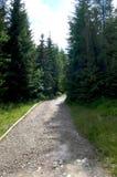 Berg rotsachtige weg in het midden van het bos Royalty-vrije Stock Afbeelding