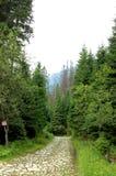 Berg rotsachtige weg in het midden van het bos Stock Afbeelding
