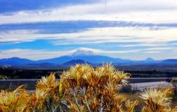 Berg Shasta royaltyfri foto