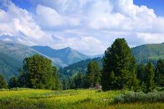 berg siberia för altaiskogliggande Arkivfoto