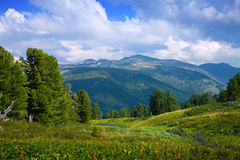 berg siberia för altaiskogliggande Royaltyfri Bild