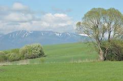 Berg sikter av den v?stra Tatrasen, sn?-korkade maxima slovakia royaltyfri foto
