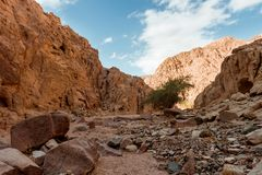 Berg in Sinai woestijn Egypte Royalty-vrije Stock Afbeelding