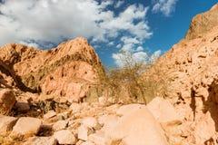 Berg in Sinai woestijn Egypte Royalty-vrije Stock Foto