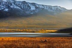 Berg sjö, Altai berg royaltyfri foto