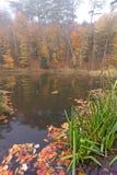 Berg sjö i höstskogen Arkivfoto