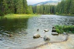 Berg sjö i skog arkivbild