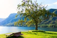 Berg sjö i sommar - sjö Bohinj royaltyfri bild