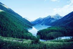 Berg sjö Kucherlinskoe från över, Altay, Ryssland Härligt berg med turkosvatten mellan bergen i taigaen arkivfoton
