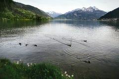 Berg sjö med änder Royaltyfri Fotografi