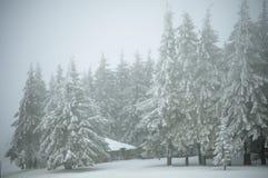 Berg som förlägga i barack i skogen Arkivfoton