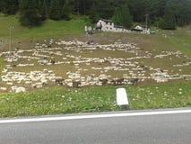 Berg som förlägga i barack med djur som betar får Arkivfoton