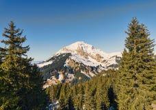 Berg som inramas av granar Royaltyfria Bilder