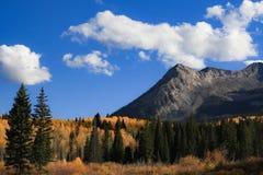 Berg som omges av den asp- skogen arkivfoton
