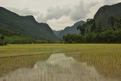 Berg som reflekterar i risfält i Muang Ngoi, Laos arkivfoton