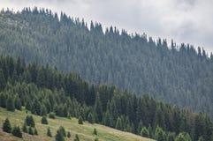 Berg som täckas av skogar, diagonal form Royaltyfri Fotografi
