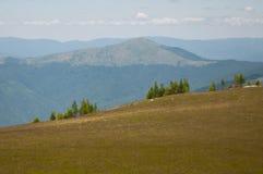 Berg som täckas av skogar och barn, sörjer träd Arkivfoton