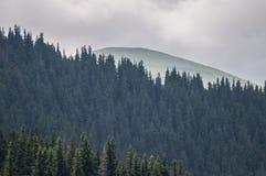 Berg som täckas av skogar på en molnig dag Royaltyfria Bilder