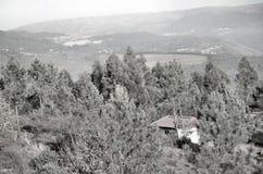 Berg som täckas av vegetation royaltyfri bild