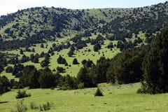Berg som täckas med träd Arkivfoto