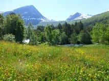 Berg Spitzen-Norwegen an einem Sommertag Stockbild