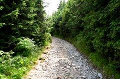 Berg, steiniger Weg mitten in dem Wald Stockbild