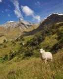 Berg-strebender Nationalpark Lizenzfreies Stockbild