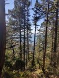 Berg Tam Forest Outlook lizenzfreie stockfotos