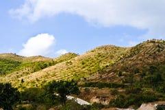 Berg in Thailand Stockfoto