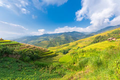 Berg und Natur in der Reisterrasse von Vietnam gestalten landschaftlich stockfotografie