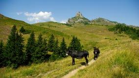 Berg und Wiesenlandschaft mit Eseln Lizenzfreie Stockfotos